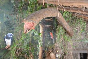 Tohle milé zvířátko bych nechtěl potkat nějak moc zblízka. Muzeum Inti-ňan