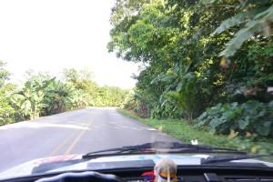 Banány kam se člověk podívá! To je Kostarika na první pohled